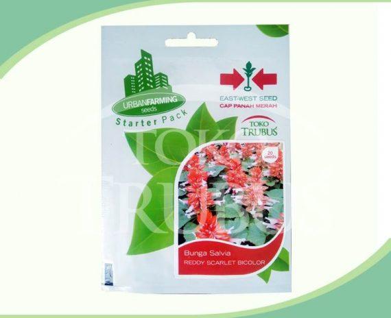 Benih Bunga Salvia Reddy Scarlet Bicolor