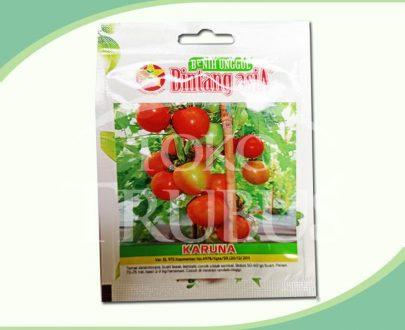Benih Tomat Karuna